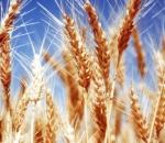 Защо растениевъдството е важно за всеки българин?