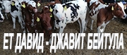 ЕТ Давид - Джавит Бейтула