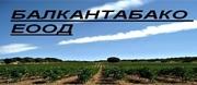 Балкантабако